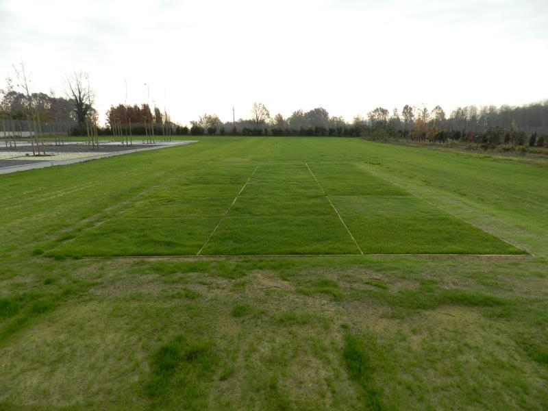 Better growth in PowerGrass